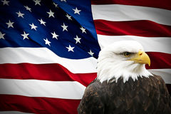 North American Bald Eagle on American flag. In background Royalty Free Stock Images