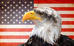 North American bald eagle. On American flag Stock Photo