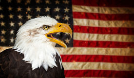 Bald Eagle with American flag. Royalty Free Stock Photos
