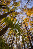 North American beech forest Stock Photos
