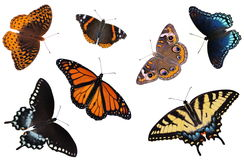 North American Butterfly Collection. A beautiful collection of North American butterflies isolated on a white background Stock Photography
