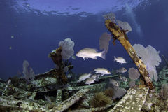 North American Coral Reefs Stock Photo