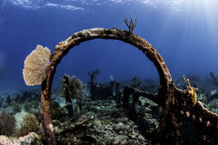 North American Coral Reefs Royalty Free Stock Images