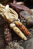 Side-by-side colored corn stock images