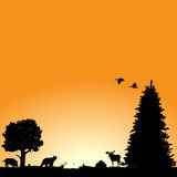 North American wildlife. Vector background with North American wildlife : plants, birds and animals Royalty Free Stock Images