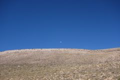 Daytime moon - North of argentina / noa, salta, jujuy royalty free stock photos