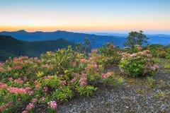 North Carolina Blue Ridge Mountain Laurel Stock Image
