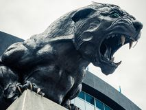 North Carolina Panthers football panther statue roaring fierce. Carolina Panthers black cat statue roaring and baring teeth in front of football stadium stock image