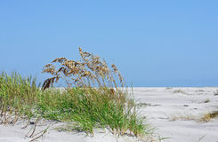 North Carolina sand dunes Stock Photos