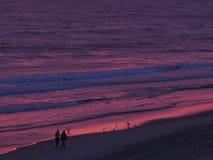 North Carolina soluppgång i lilor Arkivbild