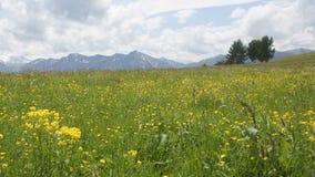 The North Caucasus. Area of Elbrus. Summer 2009 Stock Images