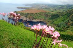 North coast of Sao Miguel island, Azores, Portugal Stock Photography