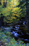 North Crestone Creek. Flowing water thru fall colors Stock Photo