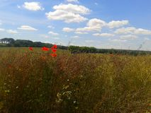 North Downs. Kent summer field poppy sky clouds Royalty Free Stock Image