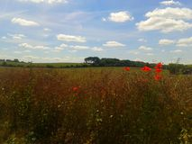 North Downs. Kent summer field poppy sky clouds Royalty Free Stock Photos