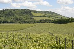 North Downs and vineyard. Surrey. England Royalty Free Stock Photos