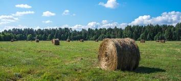 North European natural landscape. Estonia Royalty Free Stock Photos