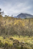 North Face of Ben Nevis & Birch Trees in Scotland. Stock Photography