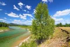 North Fork Flathead flod Montana Royaltyfria Foton