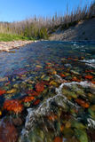 North Fork Flathead River - Montana Stock Images