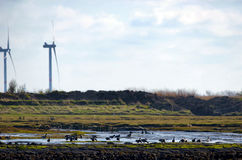 North Frisia Royalty Free Stock Images