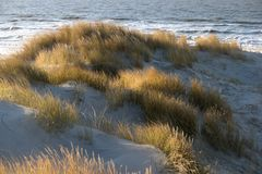 On the North Frisian Island Amrum. In Germany Stock Images