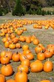 North Georgia Pumpkin Farm stock photos