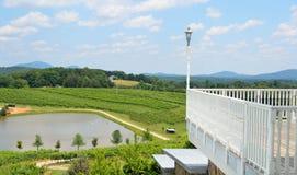 North Georgia vineyard Stock Photography