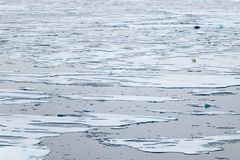 North Ice edge at 82 41.01 degrees North with a polar bear walking in the background. North Ice edge at 82 41.01 degrees North from Svalbard with a polar bear royalty free stock photos