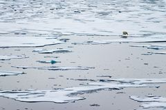North Ice edge at 82 41.01 degrees North with a polar bear walking in the background. North Ice edge at 82 41.01 degrees North from Svalbard with a polar bear stock image