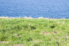 North Irish landscape with grazing in the foreground Royalty Free Stock Photos