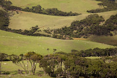 North Island Pasture Stock Photography