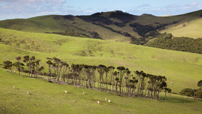 North Island Pasture Royalty Free Stock Images