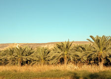 North Israel . Mountain in the Galilee from north to west . Israel stock photography