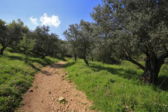 The north of Israel, mountain Meron Stock Image