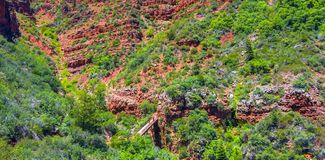 North Kaibab Trail in Grand Canyon National Park, Arizona, United States of America.  royalty free stock images