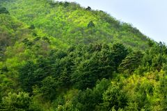North Korea scenery. North Korea. Amazing scenery. Mountains covered with pine trees and maples at sunset stock photography