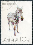 NORTH KOREA - 1975: shows Zebra, series Pyongyang Zoo Royalty Free Stock Photo