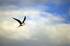 North land. Bird in tundra Royalty Free Stock Image