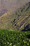 The north of Lanzarote island,Spain stock images