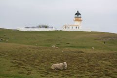 Lighthouse and sheep Stock Photos