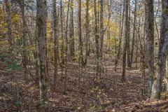 North Mississippi Panoramic Woodland Forest Landscape. A close up capture of a north Mississippi woodland forest in autumn stock photos