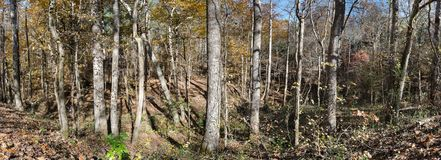 North Mississippi Panoramic Woodland Landscape. Close up of a panoramic north Mississippi woodland landscape in autumn stock image