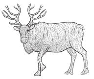 North reindeer caribou. Vintage vector illustration in sketch style Royalty Free Stock Photos