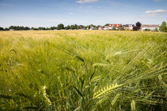 North Rhine-Westphalia, grain field, barley field Royalty Free Stock Photos