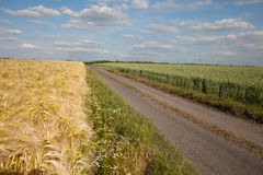 North Rhine-Westphalia, grain fields, barley field, whe Royalty Free Stock Photo