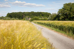 North Rhine-Westphalia, grain fields, barley fields and Stock Photos