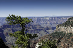 North Rim Of The Grand Canyon Royalty Free Stock Photos