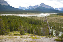 The North Saskatchewan River. In Jasper National Park, Canada royalty free stock image
