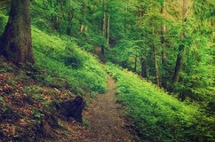North scandinavian forest Royalty Free Stock Images